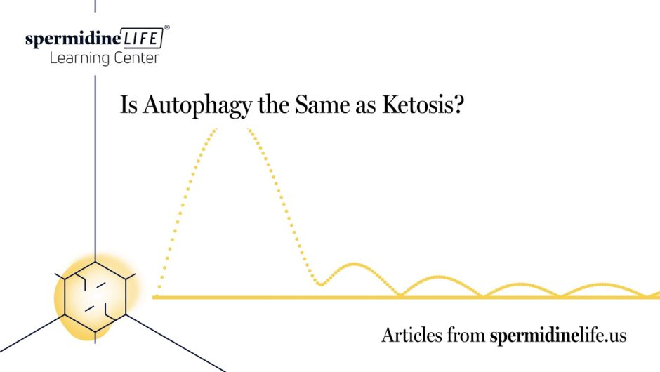 Is Autophagy the Same as Ketosis?